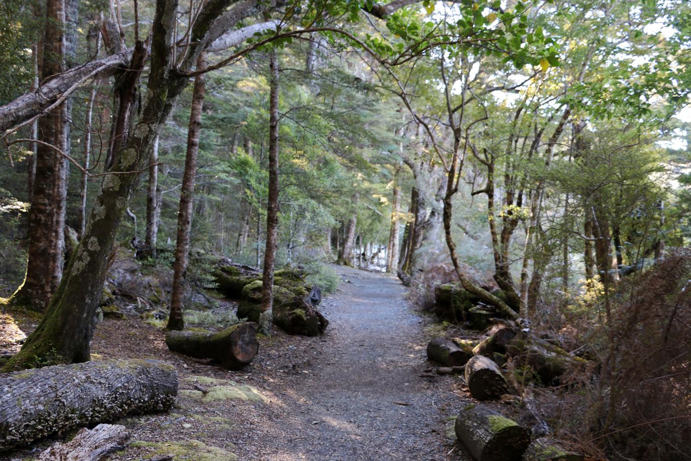 Un chemin néo-zélandais.
